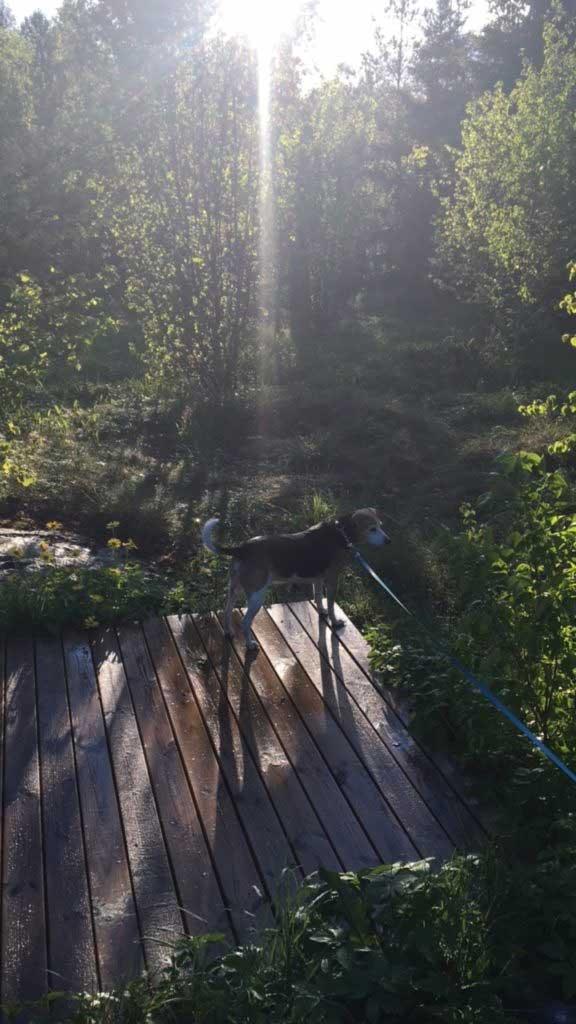 Vigselplatsen. Tanken är att vi ska ha ett valv i järn över trädäcket som vi ska pynta.
